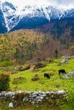Горы взгляда ландшафта Гималаи Красивая предпосылка сезона лета конца Вертикальное фото Зеленое облачное небо Threes Стоковое Изображение RF