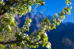 Горы взгляда крупного плана Гималаи Красивая предпосылка сезона лета конца вегетация неба моря Сардинии фото изображения берегово Стоковое Изображение