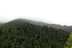 Горы в Карпатах Стоковое Изображение RF