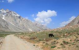 Горы Гималаев в Ladakh Стоковые Фото