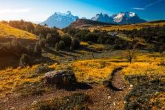 Горы, желтые луга и след Стоковое фото RF