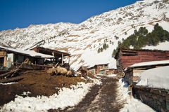 горы жизни сельские Стоковое Фото