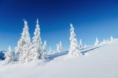 Горы загадочного ландшафта зимы величественные внутри В ожидании праздник Драматическая зимняя сцена Счастливое новое… пиво! Стоковые Изображения