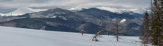 Горы зимы снежные прикарпатские, Украина стоковое изображение rf