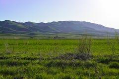 Горы и даже поле зеленого цвета Горы Казахстана стоковые изображения