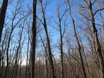 Горы и деревья в зиме Стоковая Фотография