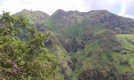 Горы и деревья в дороге Эллы Wellawaya Стоковая Фотография RF