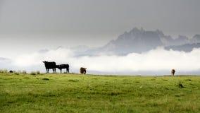 Горы и коровы Айдахо пася в поле Стоковые Изображения RF