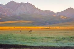 Горы и лошади песней Kul, Кыргызстаном Стоковая Фотография