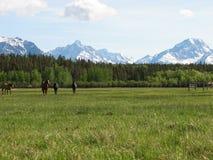 Горы и лошади стоковые изображения rf