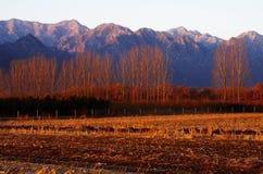 Горы и обрабатываемая земля снега Стоковые Изображения
