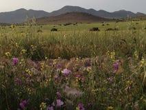 Горы и природа Стоковая Фотография