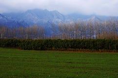 Горы и пшеничное поле снега Стоковая Фотография