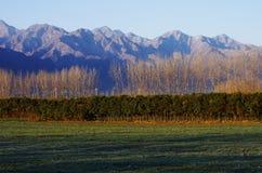 Горы и пшеничное поле снега Стоковые Фото