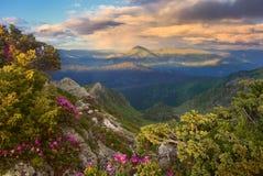 Горы и рододендрон вечера Стоковые Фотографии RF