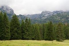 Горы и спрусы приближают к черному озеру в Черногории Стоковые Изображения