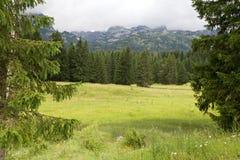 Горы и спрусы приближают к черному озеру в Черногории Стоковая Фотография