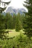 Горы и спрусы приближают к черному озеру в Черногории Стоковые Изображения RF