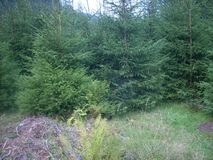 Горы, Карпаты, Украина, лес, зеленый цвет, деревья, свежий воздух Стоковые Фотографии RF