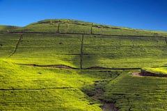 Горы кафе на открытом воздухе Шри-Ланки стоковые изображения
