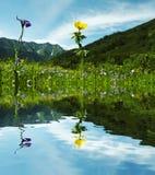 горы лужка Стоковое фото RF