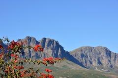 Горы накидки Стоковое Изображение RF
