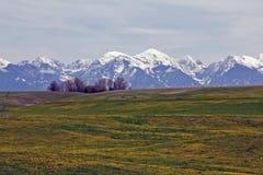 горы одуванчиков снежные Стоковые Изображения RF