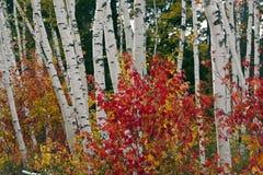 горы осени белые Стоковая Фотография
