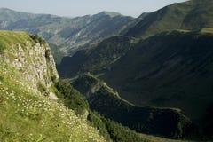 Горы панорамы цветя Стоковые Фотографии RF