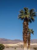 Горы, пальма и ландшафт пустыни Стоковые Изображения
