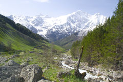 Горы покрытые с лесом стоковое изображение rf