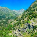 Горы покрытые с лесом стоковое фото