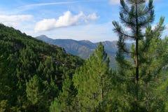 Горы покрытые с хвойными деревьями, Корсикой Стоковые Изображения