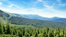 Горы покрыли деревья стоковое фото