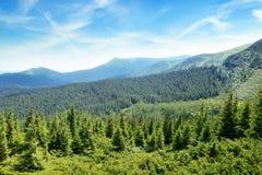 Горы покрыли деревья стоковое изображение rf