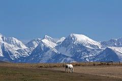 горы полета лошади Стоковое Фото