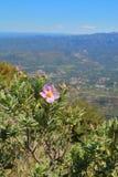 Горы полевых цветков Монтсеррата Стоковое фото RF