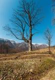 Горы предыдущей весны прикарпатские стоковая фотография