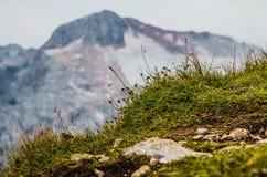 Горы, природа, вершина, туризм Стоковое Изображение