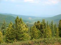 Горы, пропуск Ulagan стоковое фото rf