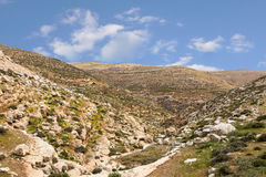 Горы пустыня Негев каньона в Израиле Стоковые Фото