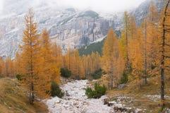 горы пущи осени стоковые фото