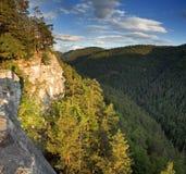 горы пущи Стоковая Фотография RF