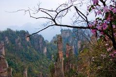 горы пущи Стоковые Фото