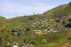 Горы сада чая Sri Lanka стоковое изображение