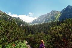 Горы Словакия tatras путешественника ландшафта горы высокие Стоковое Фото