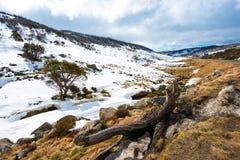 Горы снега в национальном парке Kosciuszko, Австралии Стоковая Фотография RF