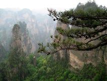 Горы сосны на заднем плане Стоковые Изображения RF