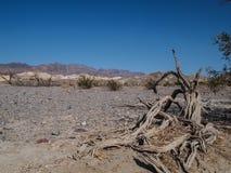 Горы, сухое дерево и ландшафт пустыни Стоковые Изображения