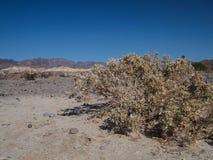 Горы, сухое дерево и ландшафт пустыни Стоковые Фото